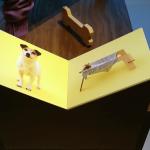 miami12dog-jack2